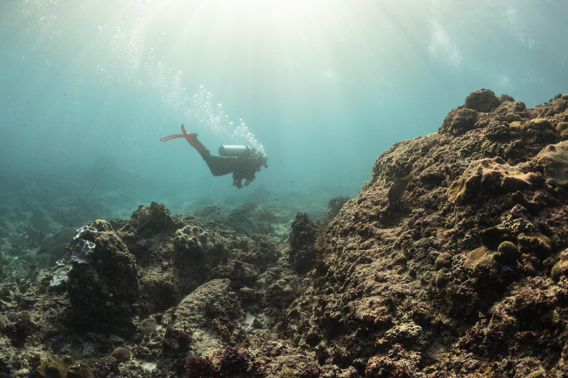 roctopus - dive site